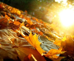autumn, leaves, and sun image
