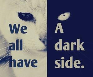 cat, dark, and white image