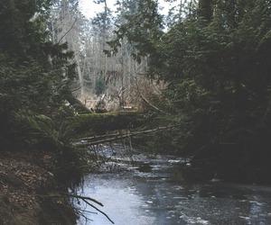 gree, nature, and natural image