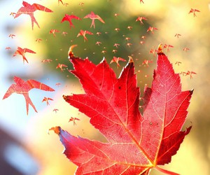 autumn, fly, and happiness image