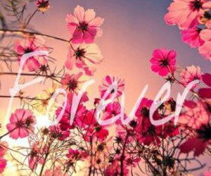 flowers, forever, and pink image