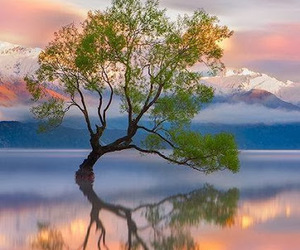 landscape, tree, and good photography image