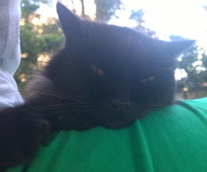 cat, green, and black image