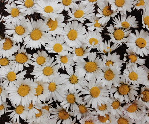 autumn, background, and daisies image