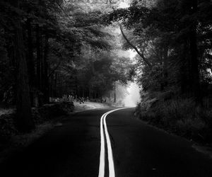 black and white, forest, and creepy image