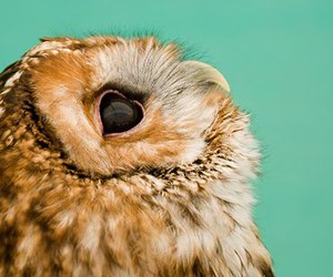 Chick, owl, and cute image