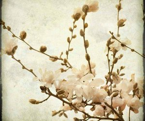 flowers, photography, and flou image