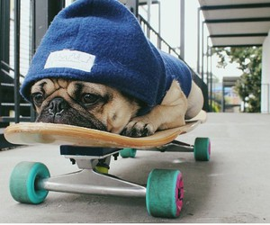 dog, top, and skate image