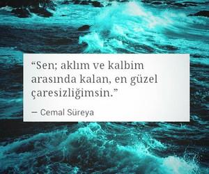tumblr, turkce, and cemal süreya image