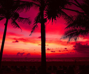 sky, palm trees, and sunset image