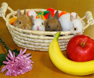 apple, baby, and basket image
