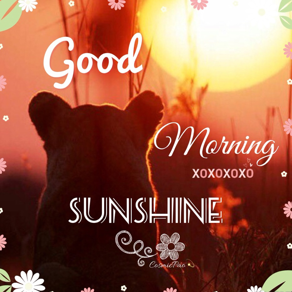 Good Morning Sunshine Shared By Cosmicpao