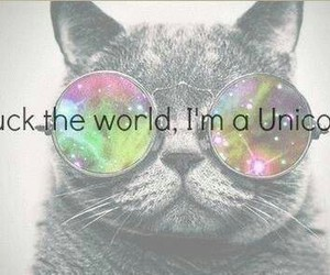 cat, funny, and unicorn image