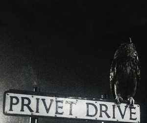 harry potter and privet drive image