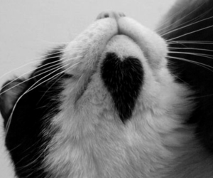 aww, heart, and b&w image