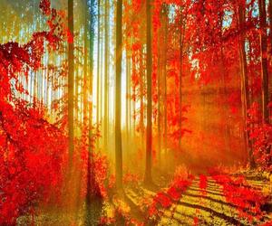 sun, autumn, and tree image