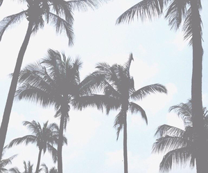 palm trees, background, and wallpaper image