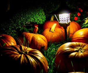pumpkins and Halloween image