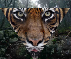 tiger, triangle, and wood image