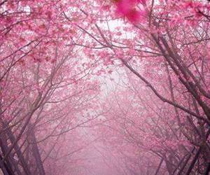 japan and cherry trees avenue image