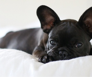 adorable, dog, and puppy image