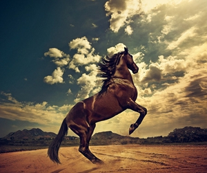 horse, jump, and photo image