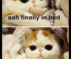 bed, funny, and HAHAHA image