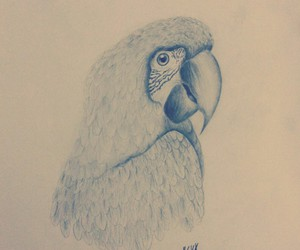 parrot drawing bird