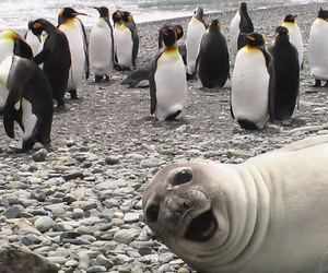 penguin, funny, and animal image