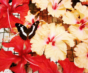 beautiful, butterfly, and park image