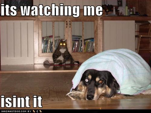 cat, dog, and watching image