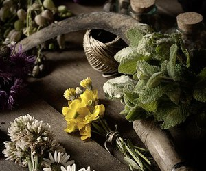 collection, herbs, and magic image