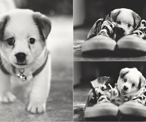 animals, dog, and converse image