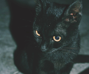 black, mysterious, and lovable image