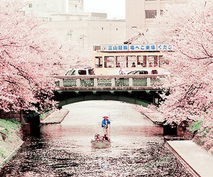 japan, beautiful, and pink image