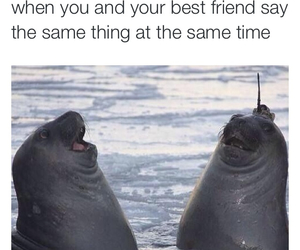 best friend, joke, and laughter image