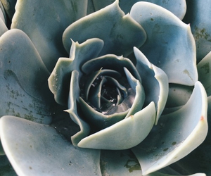 plants, blue, and cactus image