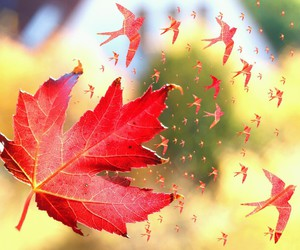 autumn, fly, and gold image