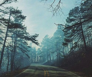 tree, road, and nature image