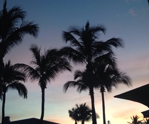 florida, palm trees, and palme image
