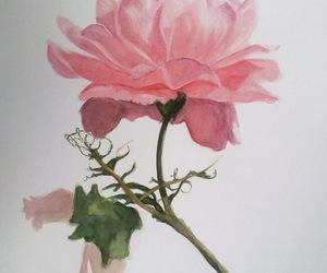 flor, flower, and vintage image