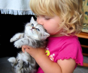 cute, cat, and kitten image