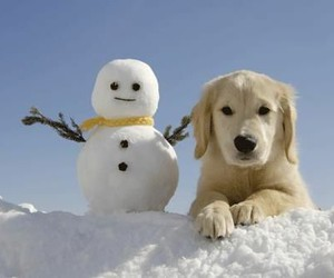 dog, winter, and christmas image