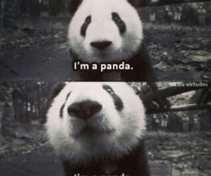 panda, animal, and black and white image