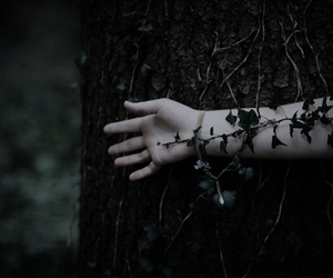 dark, nature, and forest image