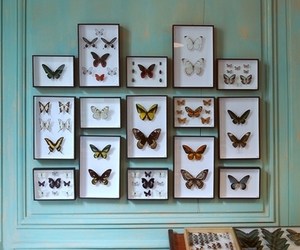 butterfly and decor image