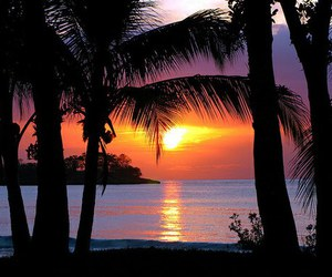 beautiful, nature, and palm trees image