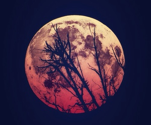 moon, night, and tree image