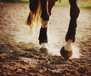 horse, life, and nature image