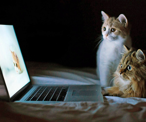 cat, laptop, and computer image